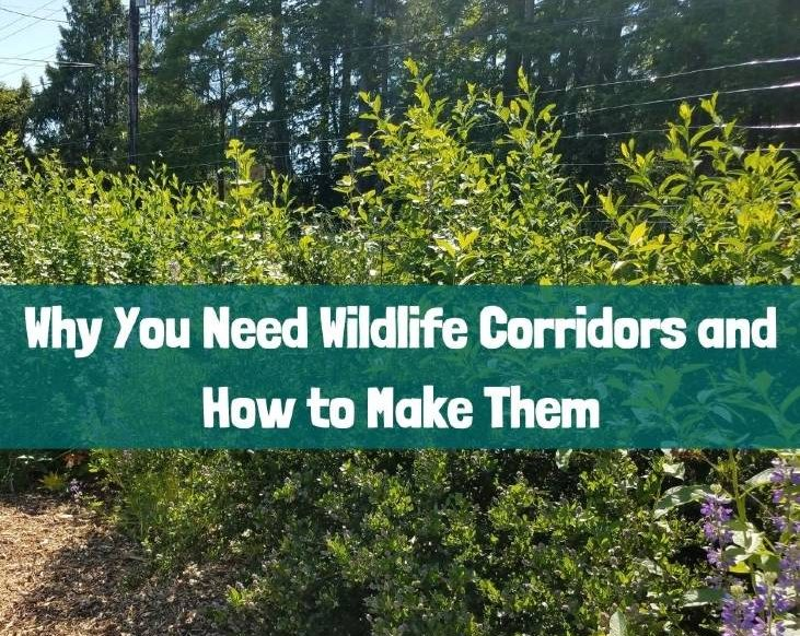 Your backyard needs wildlife corridors