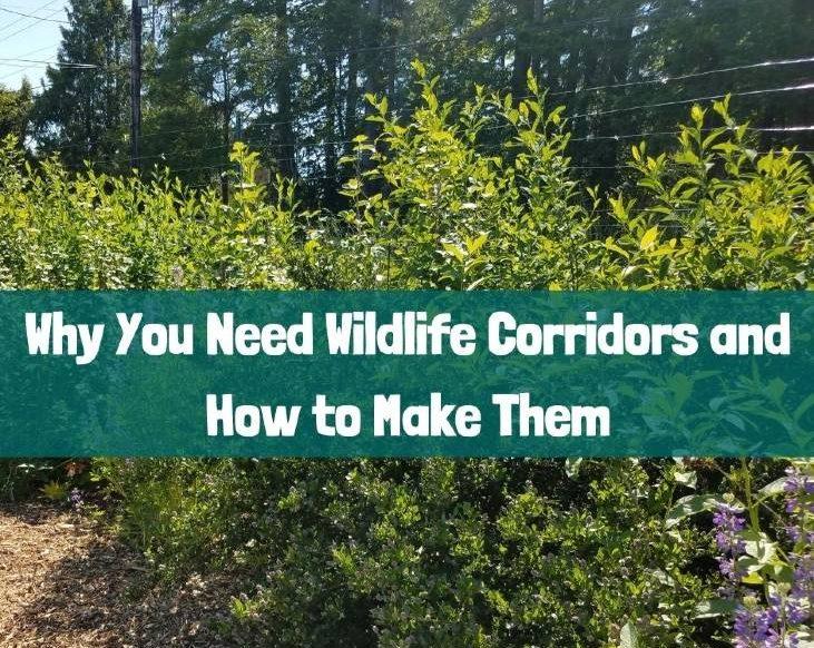 Your backyard needs wildlife corridors