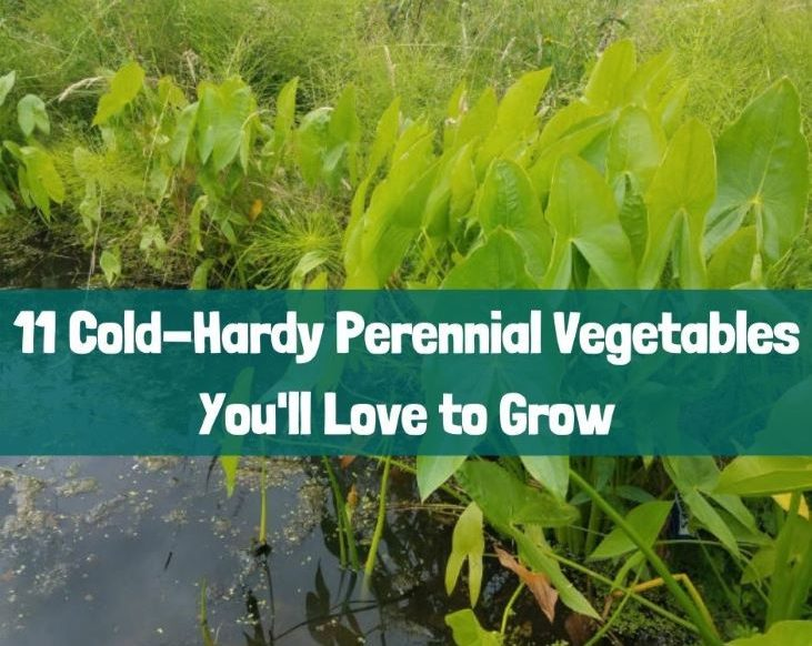 11 cold-hardy perennial vegetables featured image