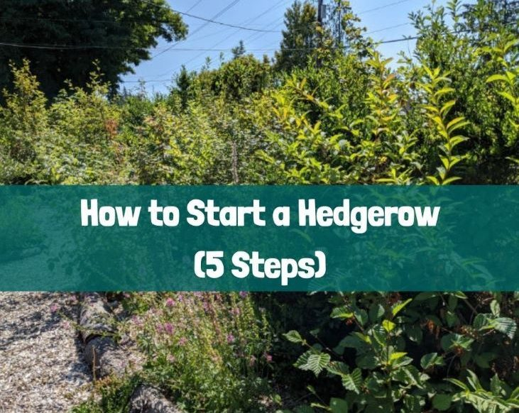 Let's Start a Hedgerow!