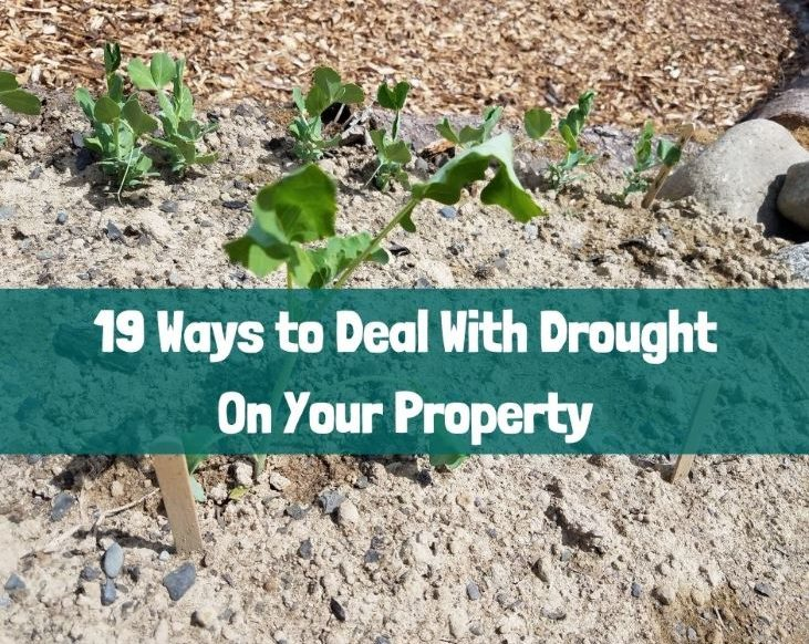 Dealing with drought on your property