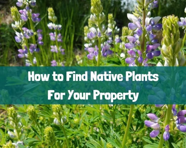 Time to find native plants!