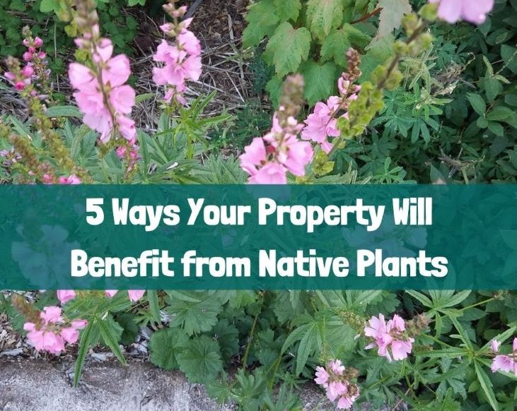 Native plants can benefit your property