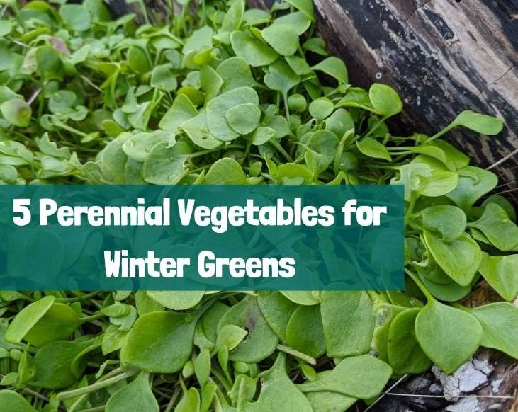 Grow these 5 perennial vegetables for winter greens