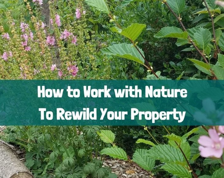 Work With Nature to Rewild Your Property