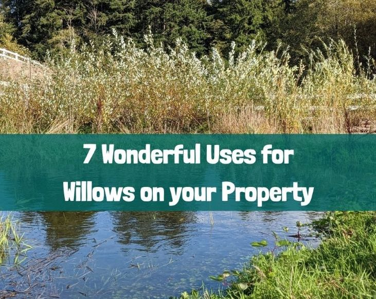 7 wonderful uses for willows
