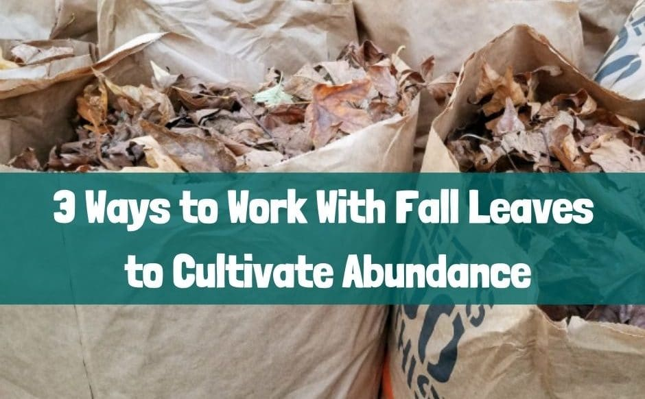 3 Ways to Work with Fall Leaves to Cultivate Abundance