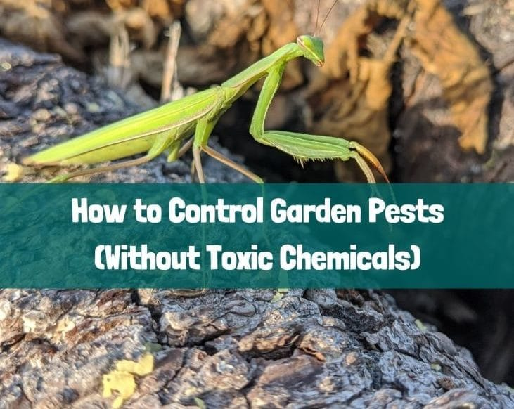 How to Control Garden Pests (Without Toxic Chemicals)