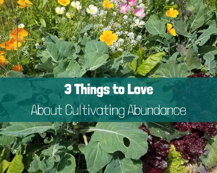 3 Things to Love About Cultivating Abundance