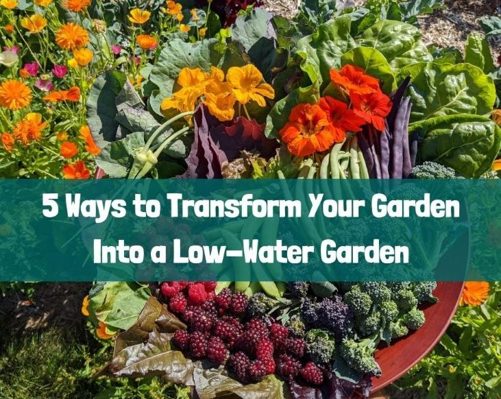 5 Ways to Transform Your Garden into a Low-Water Garden