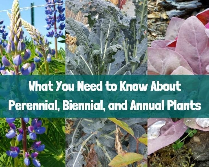 What you need to know about perennial, biennial, and annual plants