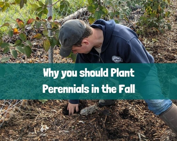 Why you should Plant Perennials in the Fall