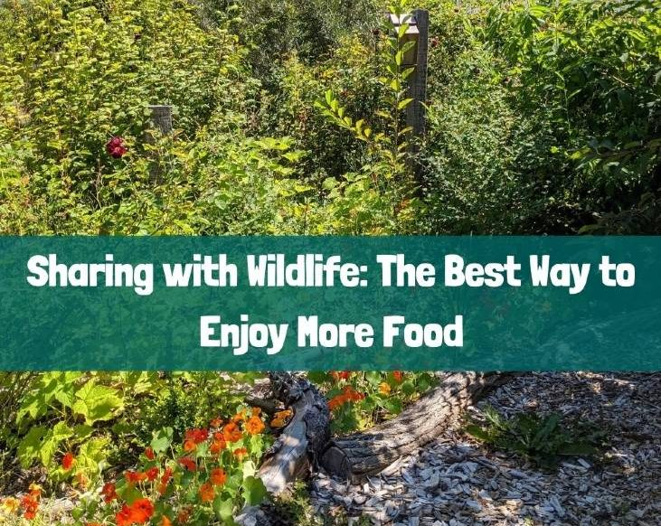 Share with wildlife to enjoy more food