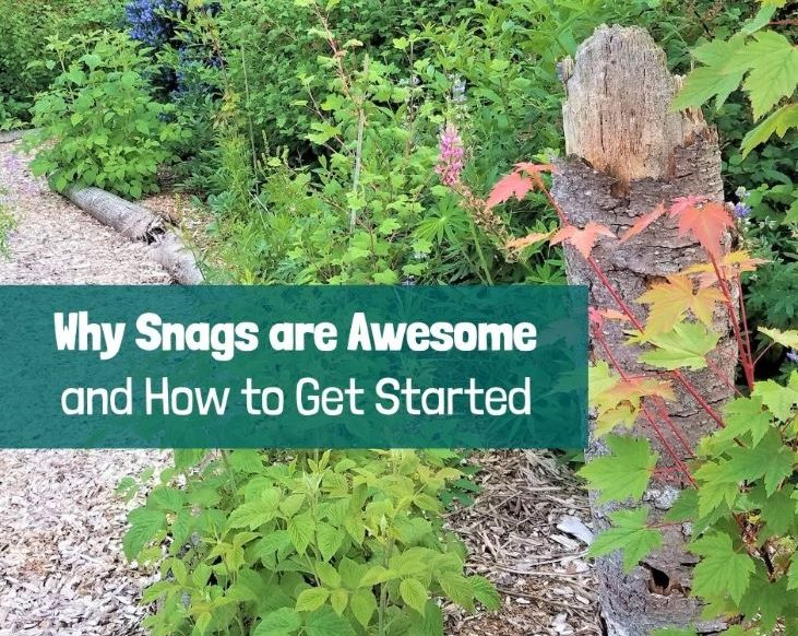 Why Snags are Awesome (And how to get started)