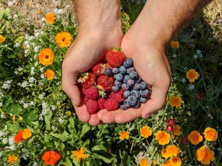 Hands holding strawberries, raspberries and blueberries
