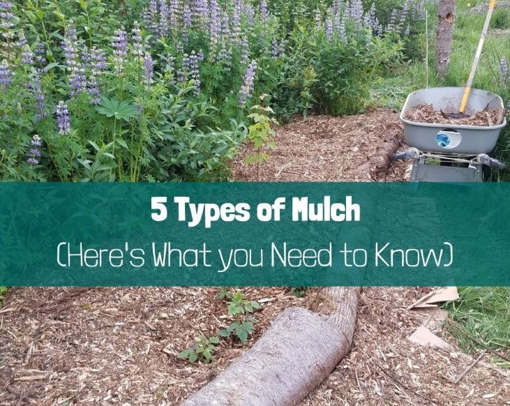 5 Types of Mulch (Here's what you need to know)