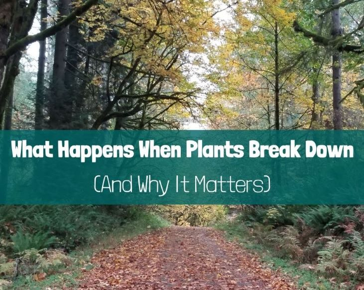 What Happens When Plants Break Down (And Why It Matters)