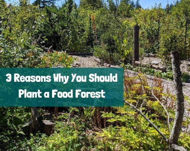 Why You Should Plant a Food Forest