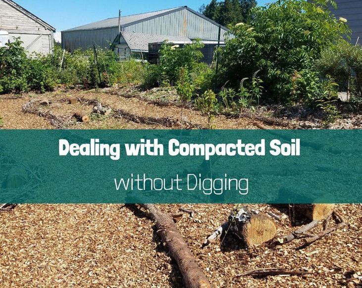 Dealing with compacted soil without digging by working with nature