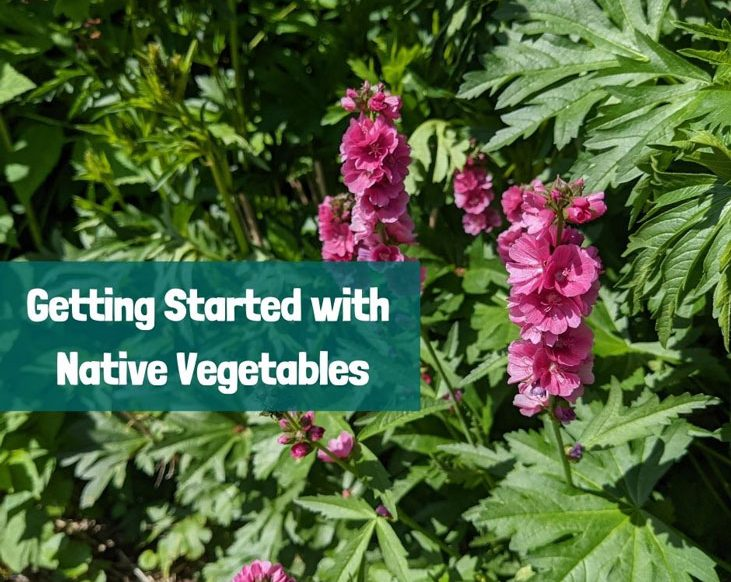 What are native vegetables? Here's how to get started.