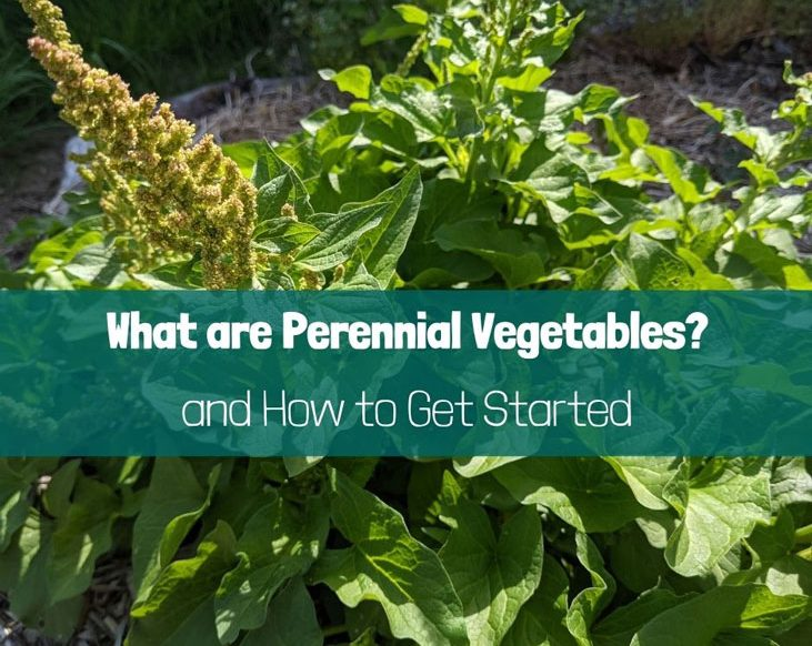 What are perennial vegetables? Here's how to get started with them.