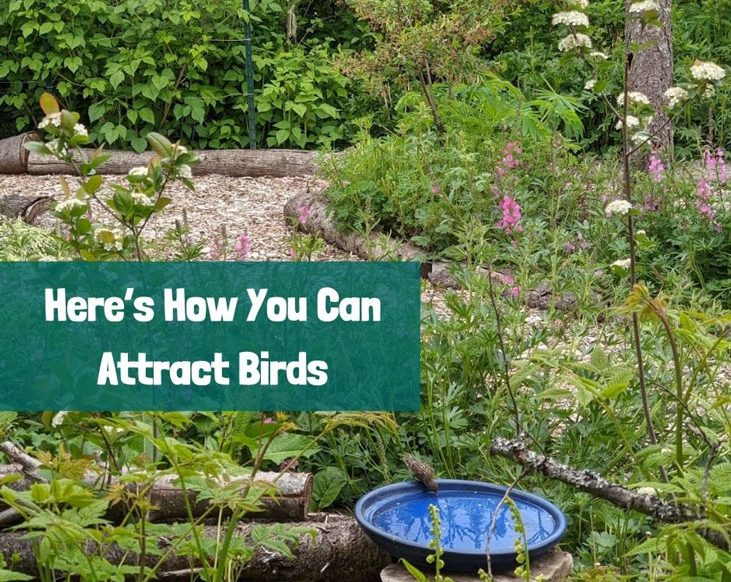 Attract birds by giving them these 3 things