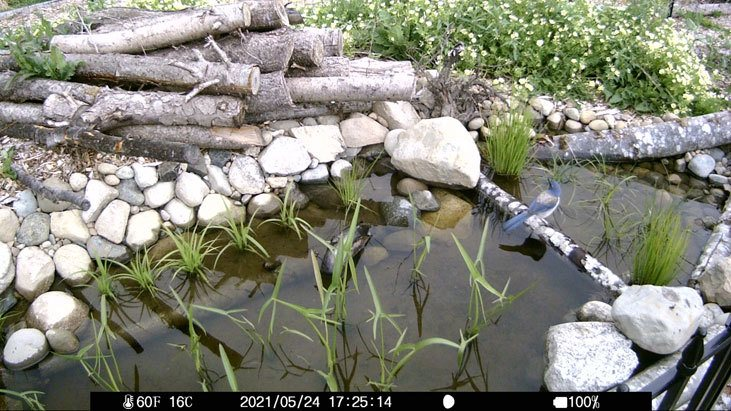 Wildlife ponds are a great way to attract birds