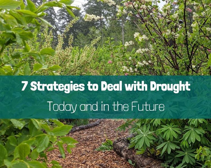 Here are 7 strategies you can use to deal with drought