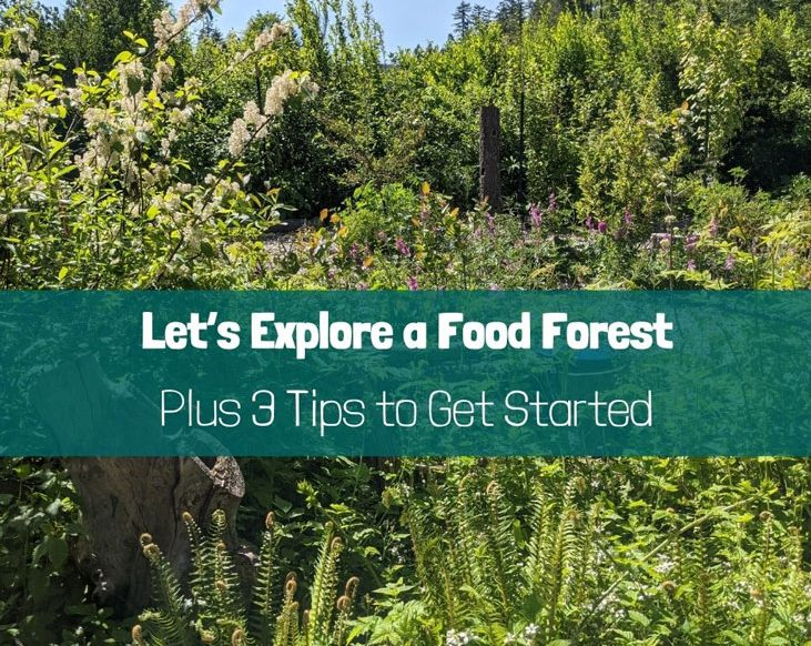 Time to explore a food forest