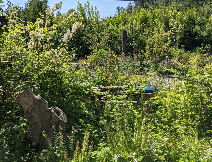 Explore a food forest so you can start your own