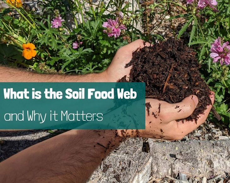 Let's promote the soil food web