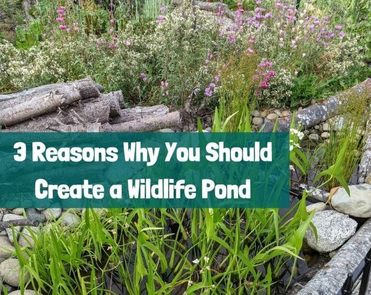 Here are 3 reasons why you should create a wildlife pond
