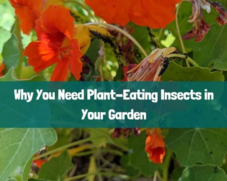 Plant-eating insects are important