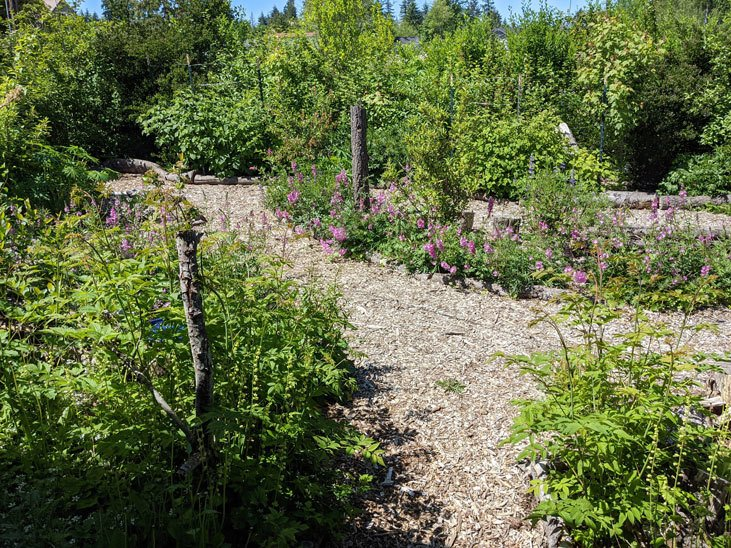 Explore a food forest so you can learn why they're so abundant