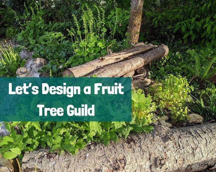 Design a fruit tree guild