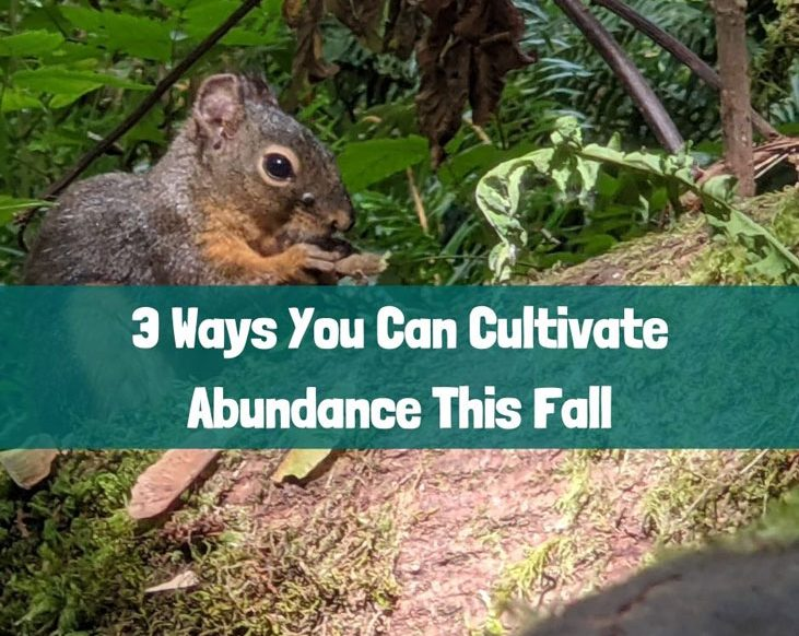 Here are 3 ways you can cultivate abundance this fall