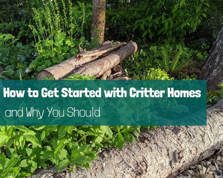 Critter homes support wildlife and help you cultivate abundance