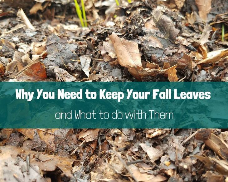 Keep your fall leaves to support wildlife and build healthy soil