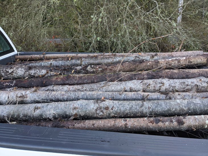 Logs that other people are getting rid of are great for critter homes.
