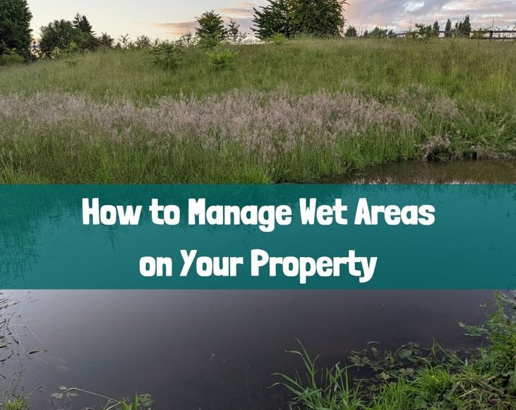 Here's how you can manage wet areas.